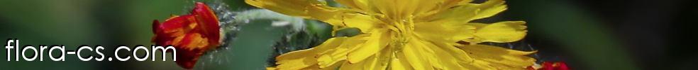 Flora-cs.com